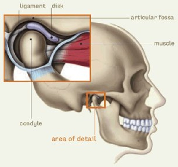 This image shows a normal condyle head in relation to the fossa, ligament and disk.